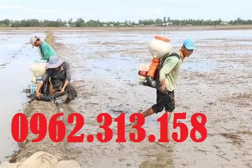 Máy phun sạ lúa Honda GX35 chính hãng Thái Lan dễ sử dụng 4