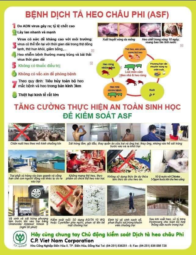 Dịch tả lợn Châu Phi tại Việt Nam và cuộc chiến chưa có hồi kết 1